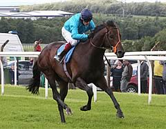 Brown Panther