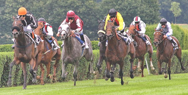 Betting on horse racing uk gamedog csgo betting